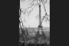 Tour Eiffel (Bough 1)
