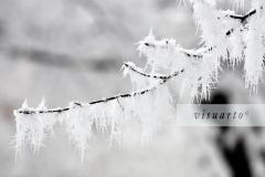 Frozen I