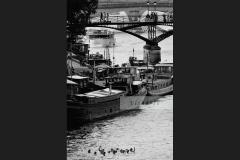 Swimming in Seine